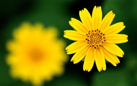 Preview wallpaper Yellow flower sharp focus