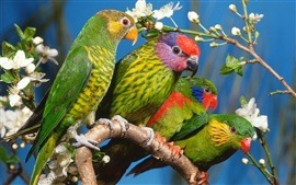 Preview wallpaper Four green parrots