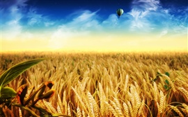 Preview wallpaper Golden wheat fields