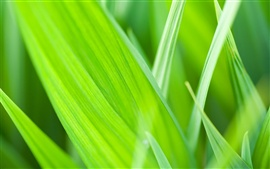 Preview wallpaper The green leaves of grass