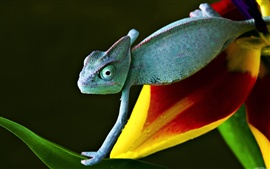 Preview wallpaper Chameleon on flower