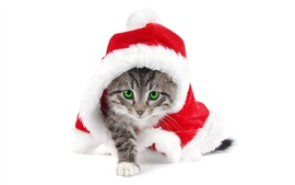 Preview wallpaper Christmas cat green eyes