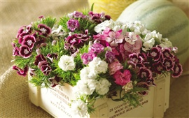 Pink and white flowers in flower box