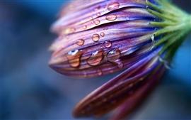 Flor roxa com gotas de água