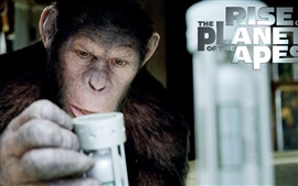 Preview wallpaper Rise of the Planet of the Apes HD