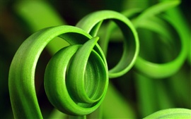 Preview wallpaper Spiral of green grass close-up
