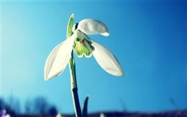 Três pétalas da flor branca