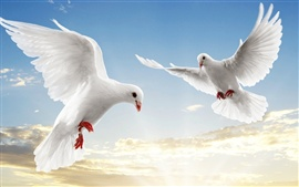 White doves soar sky