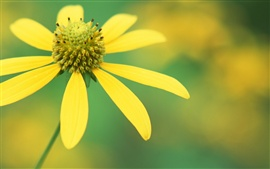 A yellow wild flower close-up