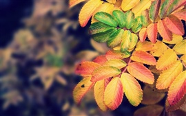 Preview wallpaper Autumn yellow leaves