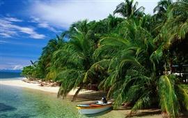 Playa árboles de coco barco