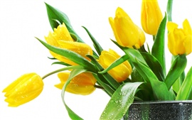 Preview wallpaper Beautiful yellow tulips flowers