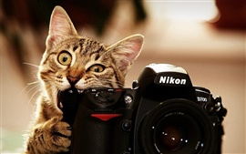 Cats also use the camera