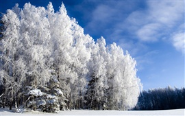 Preview wallpaper Cold winter trees