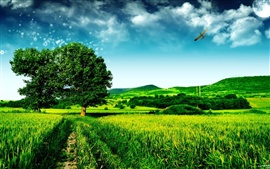 Dream green landscape