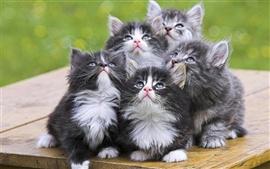 chatons chercher