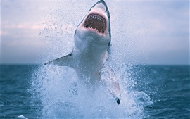 Акула выпрыгнув из воды