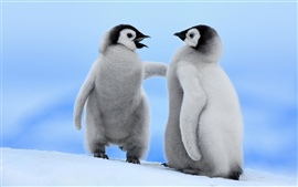 Preview wallpaper Two little penguins winter snow