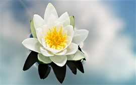 Preview wallpaper Water lily flower bud petals