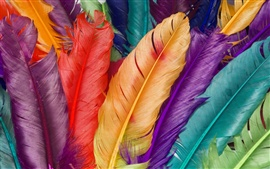 Preview wallpaper 3D colorful feathers