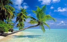 Preview wallpaper Coconut trees beach