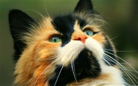 Симпатичная кошка близко фотографии