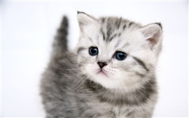 Cute kitten cat
