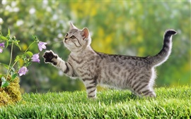 Preview wallpaper Flowers cat