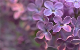 Preview wallpaper Four petals purple flowers