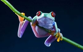 Preview wallpaper Frog close-up