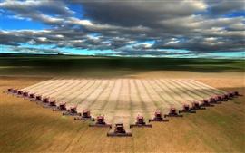 El trigo de cosecha mecánica de campo del paisaje