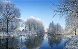 Río y los árboles en invierno