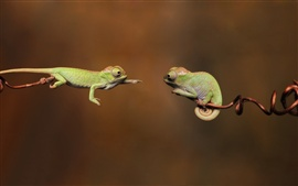 Aperçu fond d'écran deux caméléons