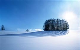 Preview wallpaper Winter's Snow