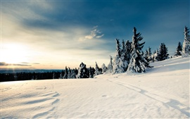 Preview wallpaper Winter snow and sun