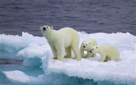 Preview wallpaper Bear and cubs on an ice floe
