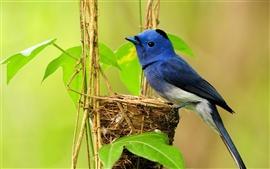 Ninho de pássaro azul