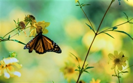 Preview wallpaper Butterfly on yellow flowers