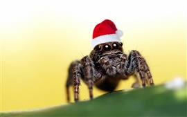 Preview wallpaper Christmas hat spider