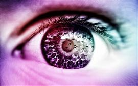 Olhos para ver as aves de criação