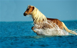Preview wallpaper Horse running water