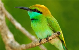 Preview wallpaper Macro photography of green bird