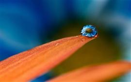 미리보기 배경 화면 매크로 물은 꽃잎에 방울