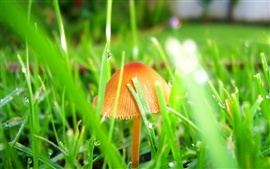 Preview wallpaper Mushrooms in the grass