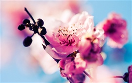 Preview wallpaper Sakura blossom pink flowers