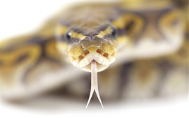 Cabeza de serpiente de close-up