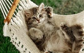 El gato acostado en una hamaca