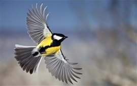 Preview wallpaper Tit wingspan flying