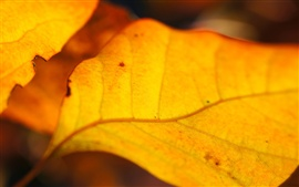 Preview wallpaper Yellow leaves of autumn close-up