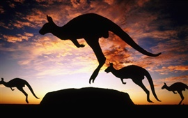 Preview wallpaper Australia kangaroo twilight